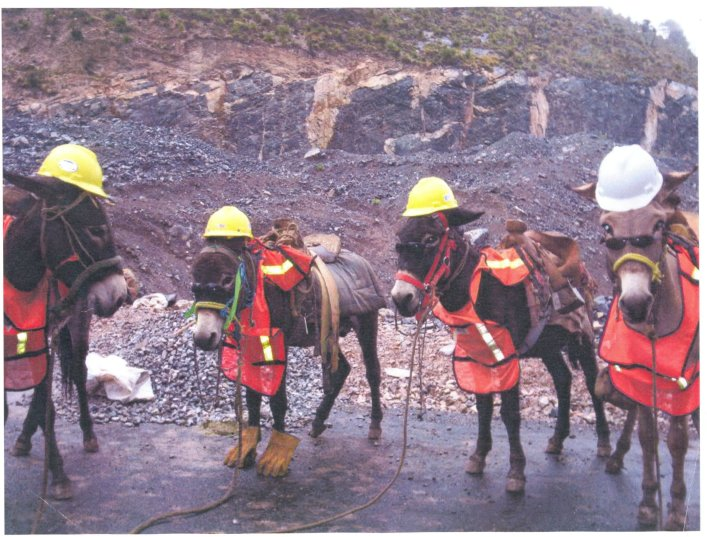 Safety_Donkeys