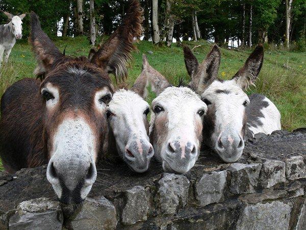 donkeyrow
