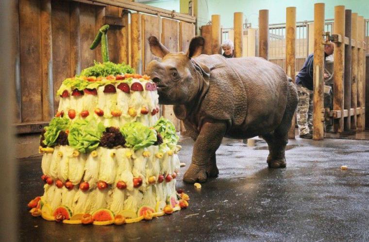 rhinobaby